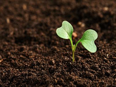 Влияние на биохумуса върху почвата