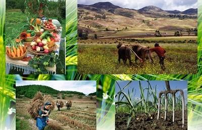 Какво е биологично земеделие