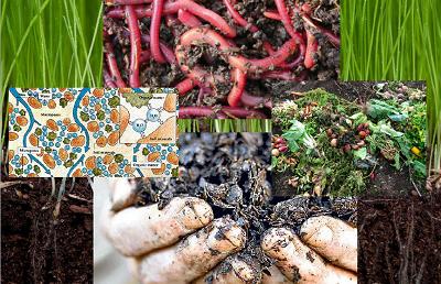 Какво означава органична материя в почвата
