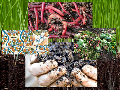 What is the organic matter for the soil ?